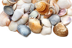 Seashells on white Royalty Free Stock Image