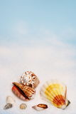 Seashells on white sand Royalty Free Stock Images