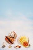 Seashells on white sand Royalty Free Stock Images