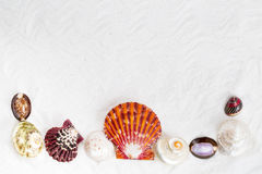 Seashells on the white sand for background. Royalty Free Stock Image