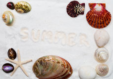 Seashells on the white sand. for Summer background Stock Photo