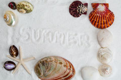 Seashells on the white sand. for Summer background Stock Photography