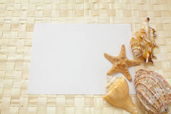 Seashells on a white sheet of paper Stock Image