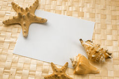 Seashells on a white sheet of paper Stock Photos