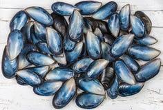 Seashells on white wood background Stock Photos