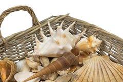 Seashells in a wicker baket isolated. Horizontally. Stock Images