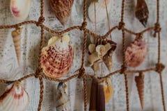 Seashells wiesza zakończenie Fotografia Royalty Free