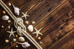 Seashells on wood Royalty Free Stock Image
