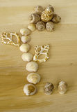 Seashells on the wooden background. stock images