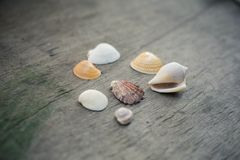 Seashells on the wooden background. Seashells on the old grey wooden background Stock Image