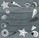 Seashells on wooden background Royalty Free Stock Images