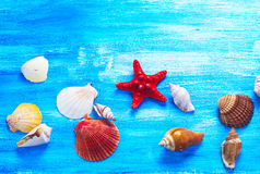 Seashells Stock Image