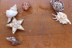 Seashells on a wooden board Royalty Free Stock Image