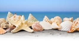 Seashells Royalty Free Stock Photography