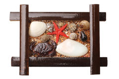 Seashells in wooden frame Royalty Free Stock Images
