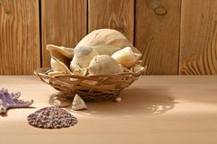 Seashells on a wooden table. Collection of sea mollusks royalty free stock images
