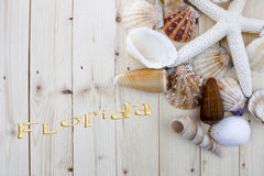 Seashells with word florida written. On wooden background Royalty Free Stock Images