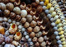 Seashells wykładający w rzędach Zdjęcia Stock