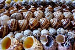 Seashells wykładający w rzędach Zdjęcia Royalty Free