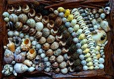 Seashells wykładający w rzędach Obraz Royalty Free