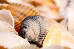 Seashells Wypełniająca rama zdjęcia stock