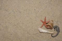 Seashells y caballo de mar Fotos de archivo libres de regalías