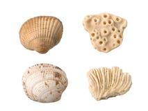 Seashells y corales Imagen de archivo