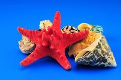 Seashells y estrellas de mar Imagenes de archivo