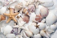 Seashells y estrellas de mar Imágenes de archivo libres de regalías