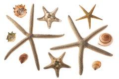 Seashells y estrellas de mar Imagen de archivo libre de regalías