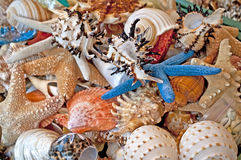Seashells y estrellas de mar Imagen de archivo