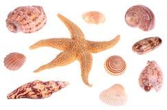 Seashells y estrellas de mar fotos de archivo