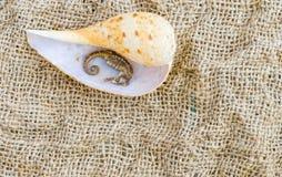 Seashells zakończenie na lnie i przestrzeń dla teksta Zdjęcia Stock