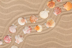 Seashells and a zigzag from the sand. Royalty Free Stock Photos