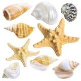 Seashellsammlung getrennt Stockfotos