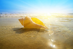 Seashellsand und -ozean lizenzfreies stockfoto