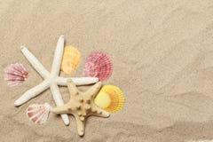 Seashellsansammlung auf Sand stockfotos