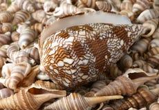Seashellsfeld. Stockfotografie