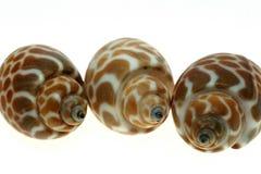 Seashellsfeld Lizenzfreie Stockfotografie