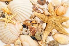 Seashellshintergrund Lizenzfreie Stockfotografie