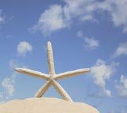 Seashellstreibholz auf braunem Hintergrund Lizenzfreies Stockbild