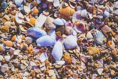 Seashels на песчаном пляже Предпосылка летних каникулов моря Стоковая Фотография RF