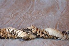 Seashlles dell'annata Immagini Stock