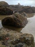 Seashore во время отлива Стоковое Изображение