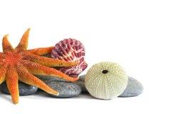 seashore жизни все еще стоковое изображение rf