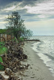 Seashore с деревьями inrush после шторма Стоковые Фотографии RF