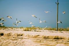 seashore Fotografia de Stock Royalty Free