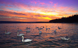 Белые птицы вдоль seashore захода солнца Стоковое Изображение