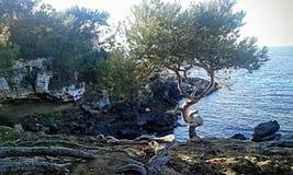 seashore Стоковая Фотография RF