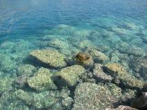 seashore Royaltyfri Bild